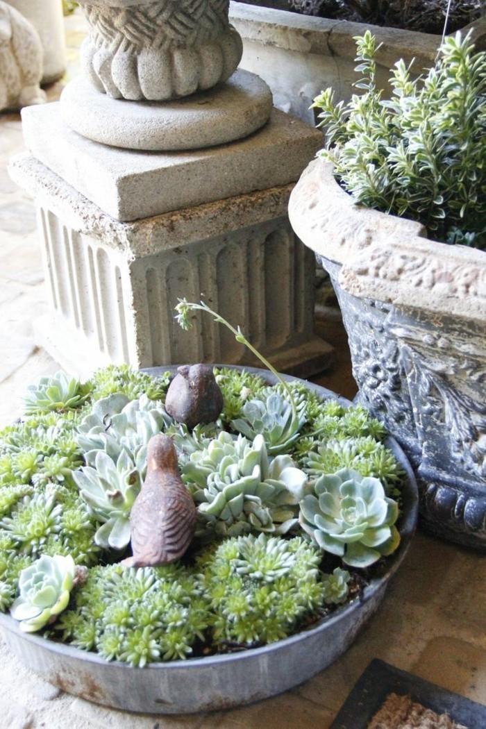 gartenideen mit sukkulenten für einen eleganten gartenlook