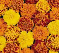 Typische Herbstblumen bringen Ihren Garten zum Leuchten