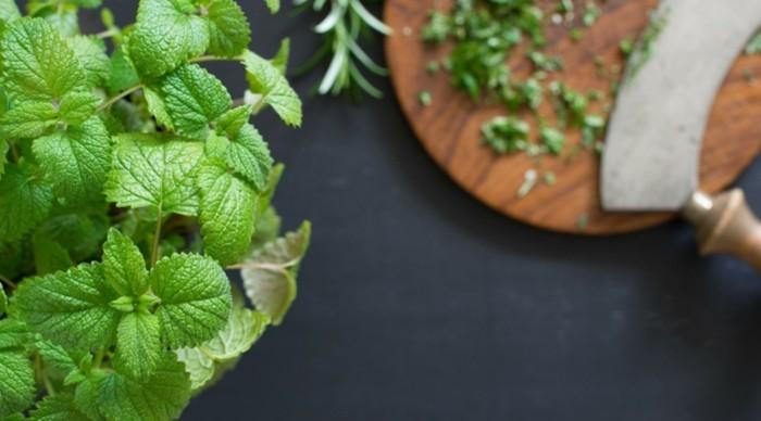 kräutertee gegen kopfweh melisse natürliche heilungsmittel