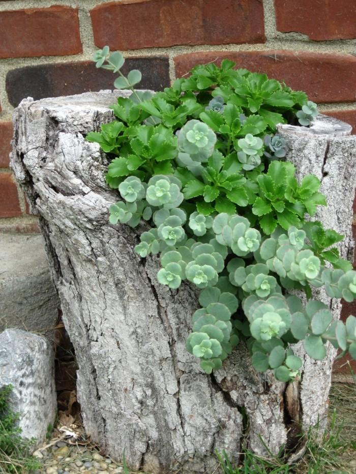 kreative gartenideen baumstumpf und pflanzen sehen herrlich zusammen aus