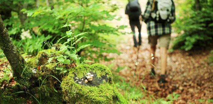 stress abbauen durch einen spaziergang im wald