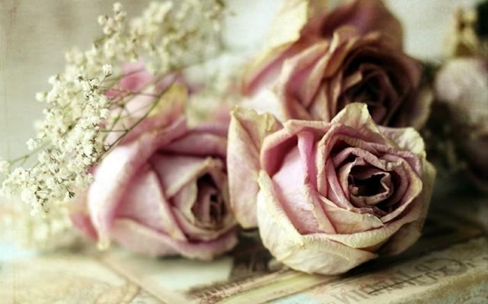 trockenblumen rosen sehen auch getrocknet wunderschön aus