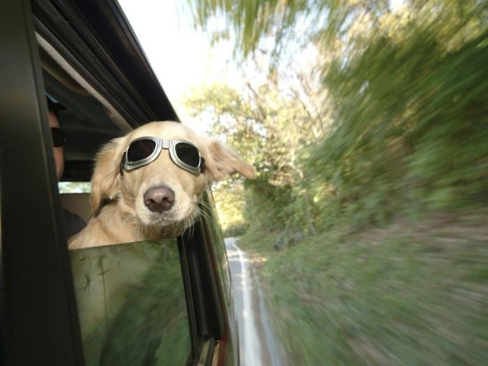 urlaub mit hund der hund muss sich wohl im auto fühlen