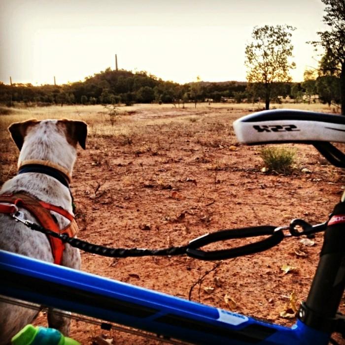 reisen und urlaub mit dem hund freizeitaktivitäten mit dem haustier