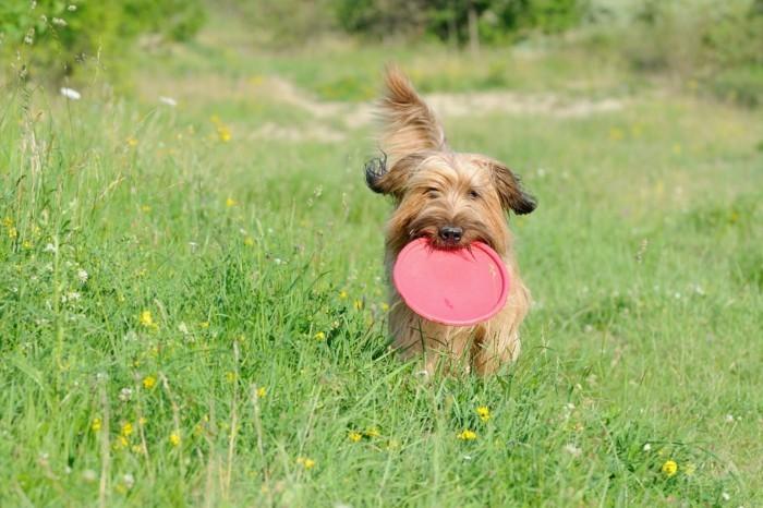 reisen und urlaub mit dem hund schöne ideen für die freizeit