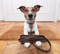 Urlaub mit Hund – praktische Tipps für tolle Reisen mit Ihrem Vierbeiner