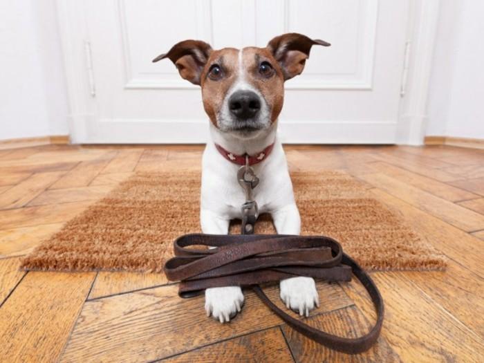 urlaub mit hund sich für die reise vorbereiten