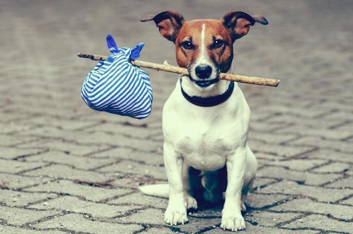urlaub mit hund spannende erlebnisse mit dem haustier