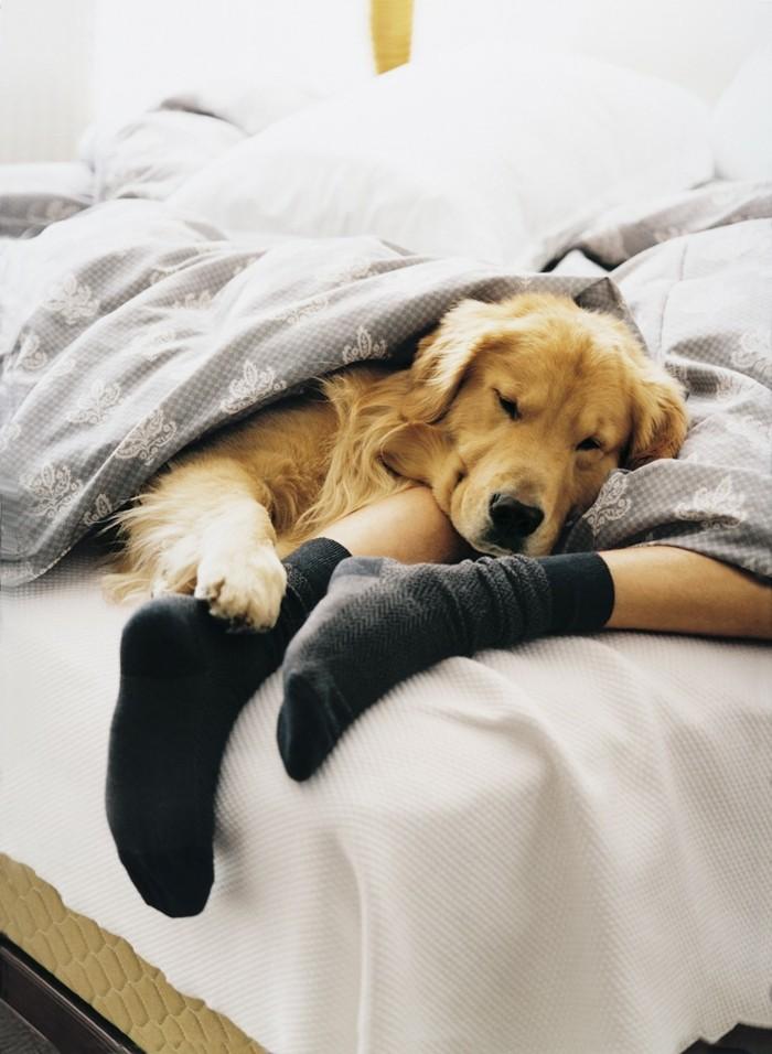 reisen und urleub ferien mit dem hund in einem tierfreundlichen hotel