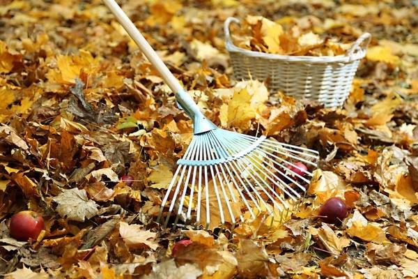Gartenarbeit im Herbst Laub