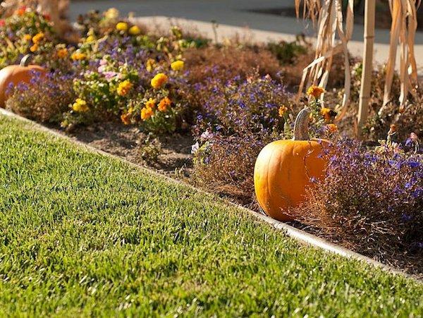 Gartenarbeit im Herbst mit Kürbissen dekorieren