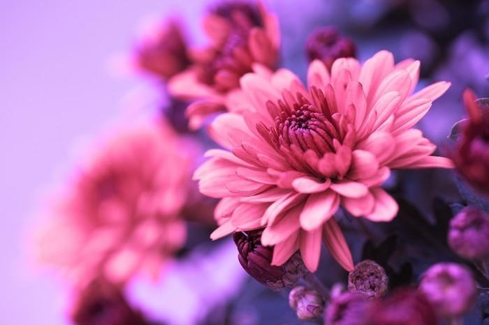 Herbst im Garten Herbstblumen
