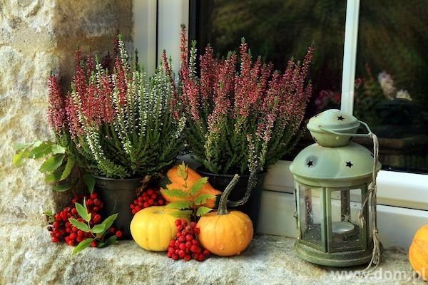 Kürbissen Herbstblumen Beeren dekorieren