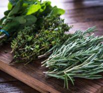 Entgiftungstee – welche Kräutergetränke helfen bei Detox