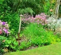 ▷garten & pflanzen - über 1000 ideen für gartengestaltung und, Garten Ideen