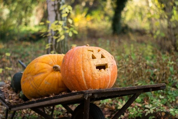kürbis selber schnitzen zu halloween