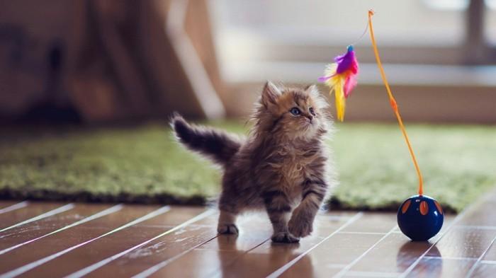 katzenspielzeug selber machen austoben lassen