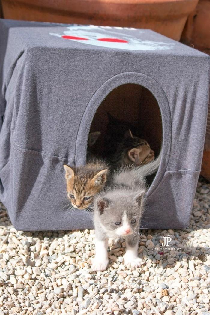 katzenspielzeug selber machen katzenhaus aus tshirt