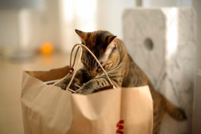 katzenspielzeug selber machen papiertasche