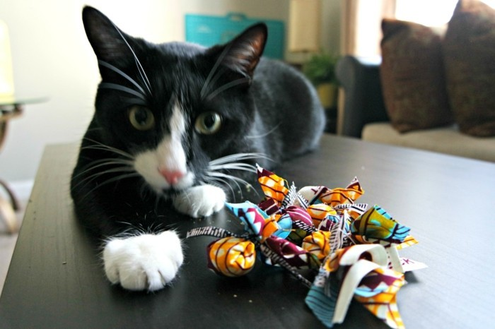 katzenspielzeug selber machen rassel