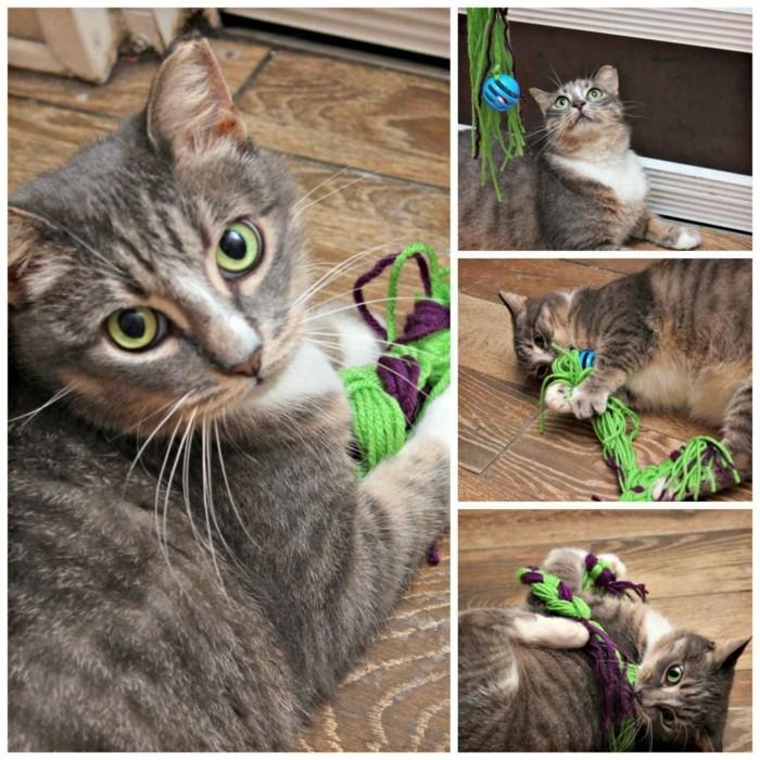 katzenspielzeug selber machen verspielt