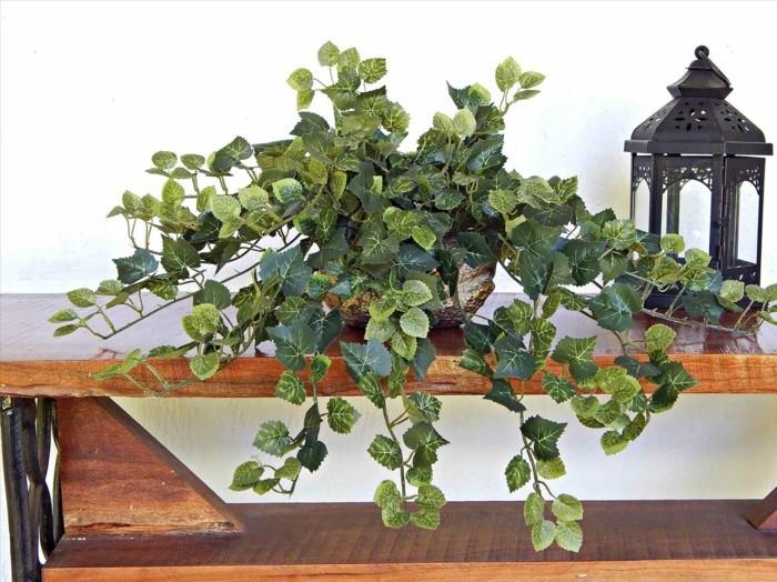 pflegeleiche zimmerpflanzen heilkraeuter efeu