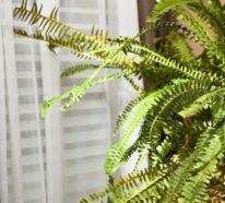 11 pflegeleichte Zimmerpflanzen und Heilkräuter, mit denen das Leben besser ist