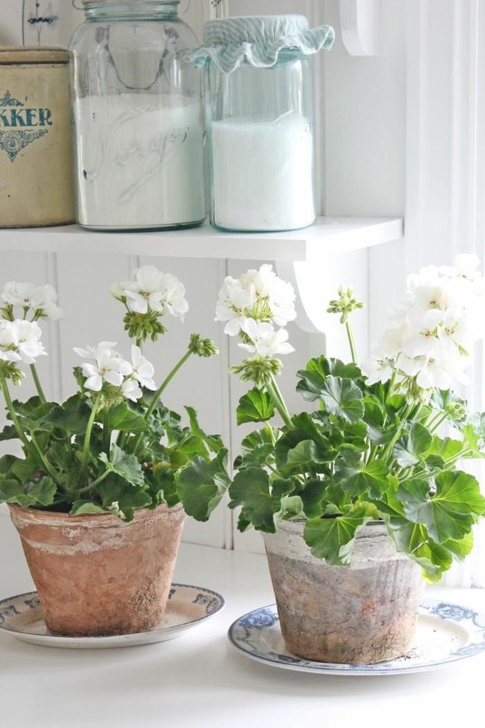 pflegeleiche zimmerpflanzen heilkraeuter geranie