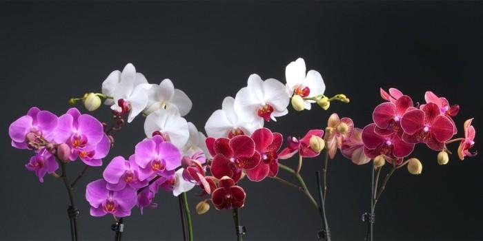 pflegeleiche zimmerpflanzen heilkraeuter orchideen 2