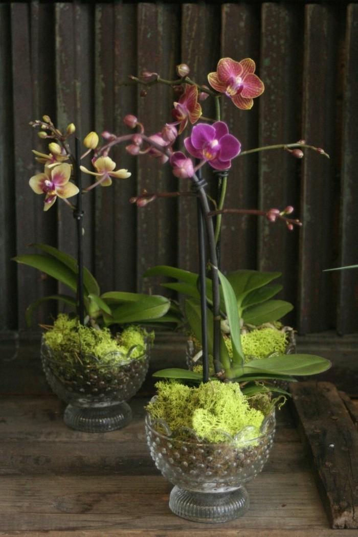 pflegeleiche zimmerpflanzen heilkraeuter orchideen