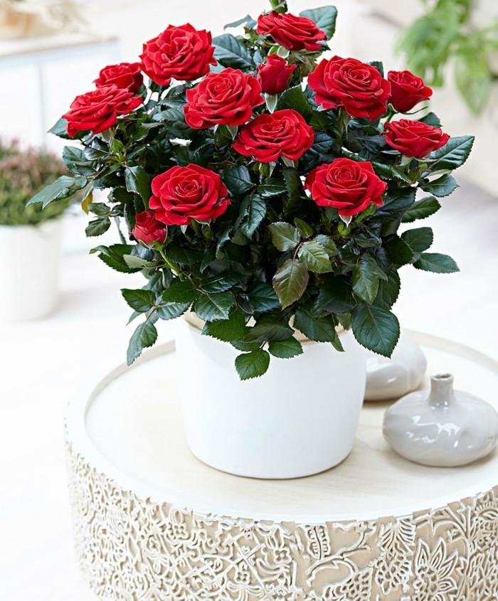 pflegeleiche zimmerpflanzen heilkraeuter rosen