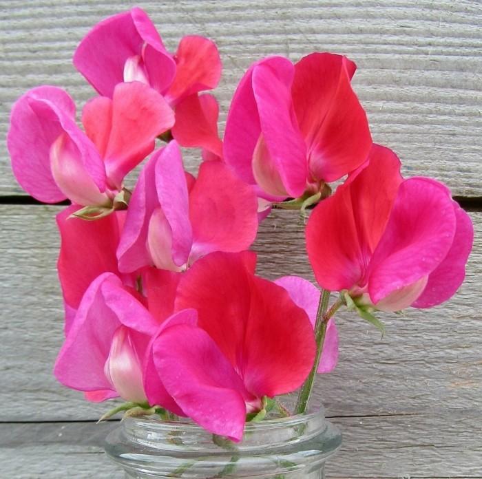 pflegeleiche zimmerpflanzen heilkraeuter rosmarin suesse erbse 2