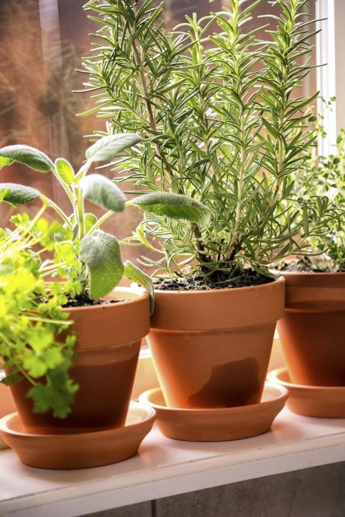 pflegeleiche zimmerpflanzen heilkraeuter rosmarin