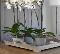 Stilvolle DIY-Dekoration mit Zimmerpflanzen schnell und praktisch gestalten – So geht es!