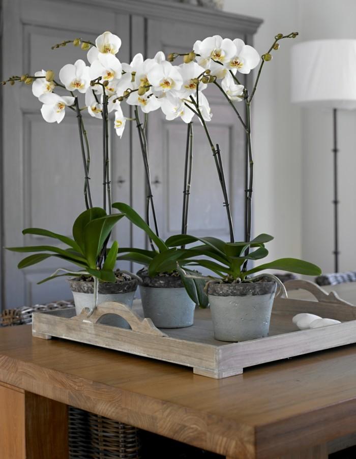 schöne dekoration mit orchideen diy