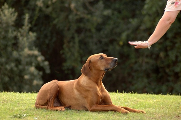trainigsbelohnung mit hundeleckerlies