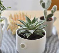 Sukkulenten Deko Ideen bringen eine grüne Note in Ihr Zuhause