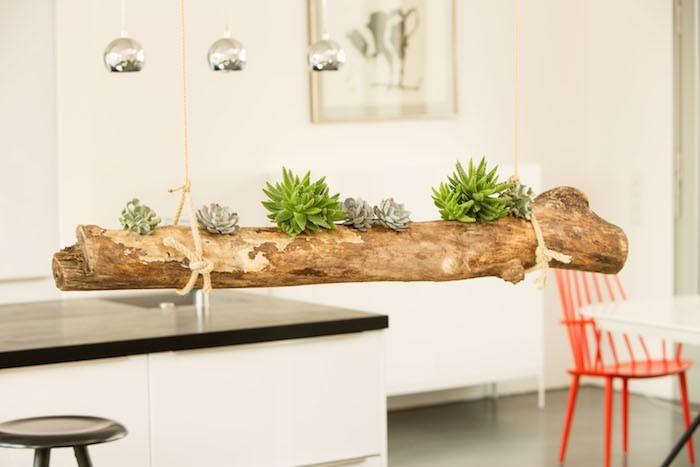 Sukkulenten Treibholz moderne Küche