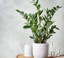 Zimmerpflanzen, die auch im dunklen Bad gut gedeihen - Fresh ...