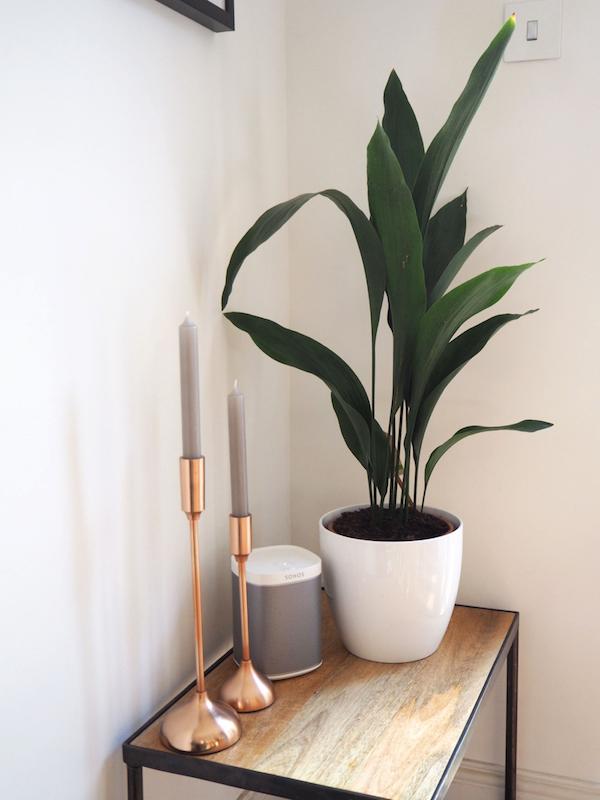 Zimmerpflanzen fürs Bad Schusterpalme grüne Ecke