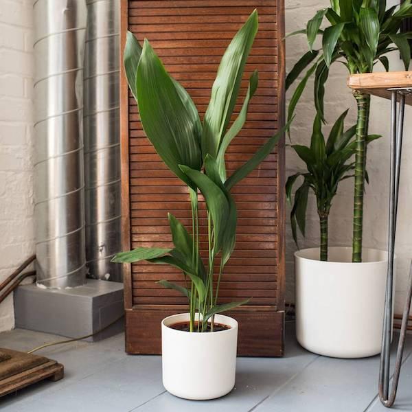 Pflanze fürs bad