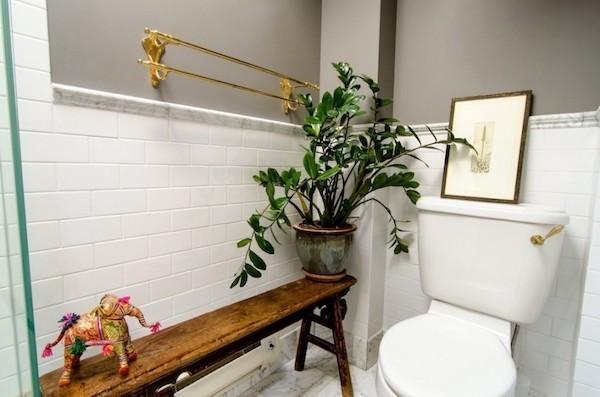 Zimmerpflanzen fürs Bad Zamioculcas robust pflegeleicht schön