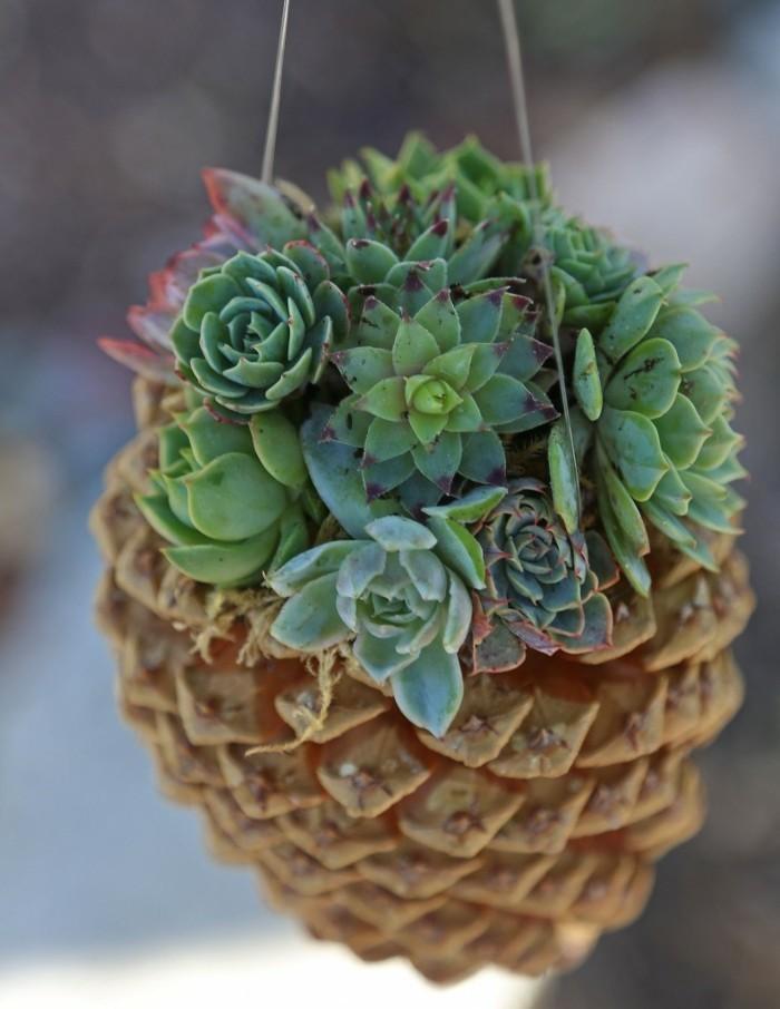 kreativ basteln tannenzapfen herbstdeko basteln sukkulenten