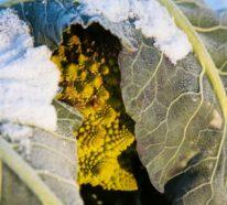Wintergemüse, Ahoi! – 30 Rezeptideen mit Gesundem aus der Region