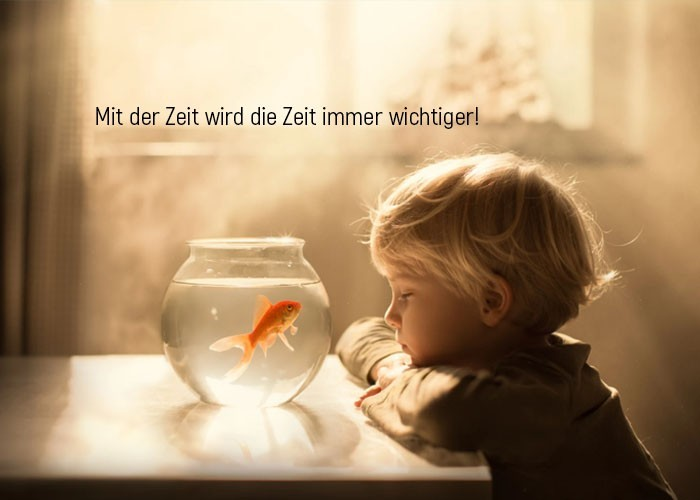lebensweisheiten junge goldfisch aquarium