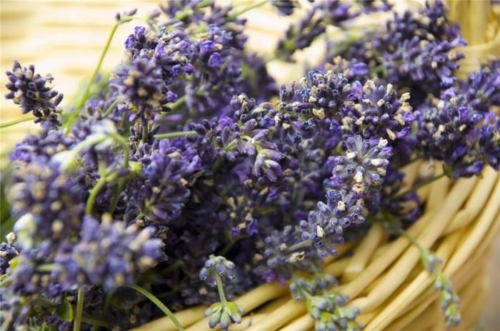 weihnachtsduft selber machenn zitrusduft lavendel