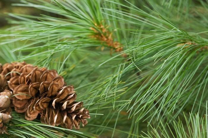 weihnachtsschmuck basteln mit naturmaterialien fichtenzweig