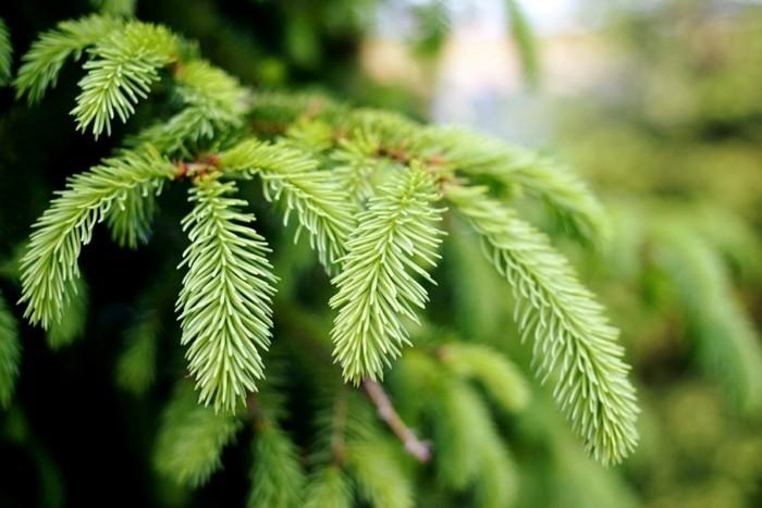 weihnachtsschmuck basteln mit naturmaterialien weihnachtskekse tannenbaum