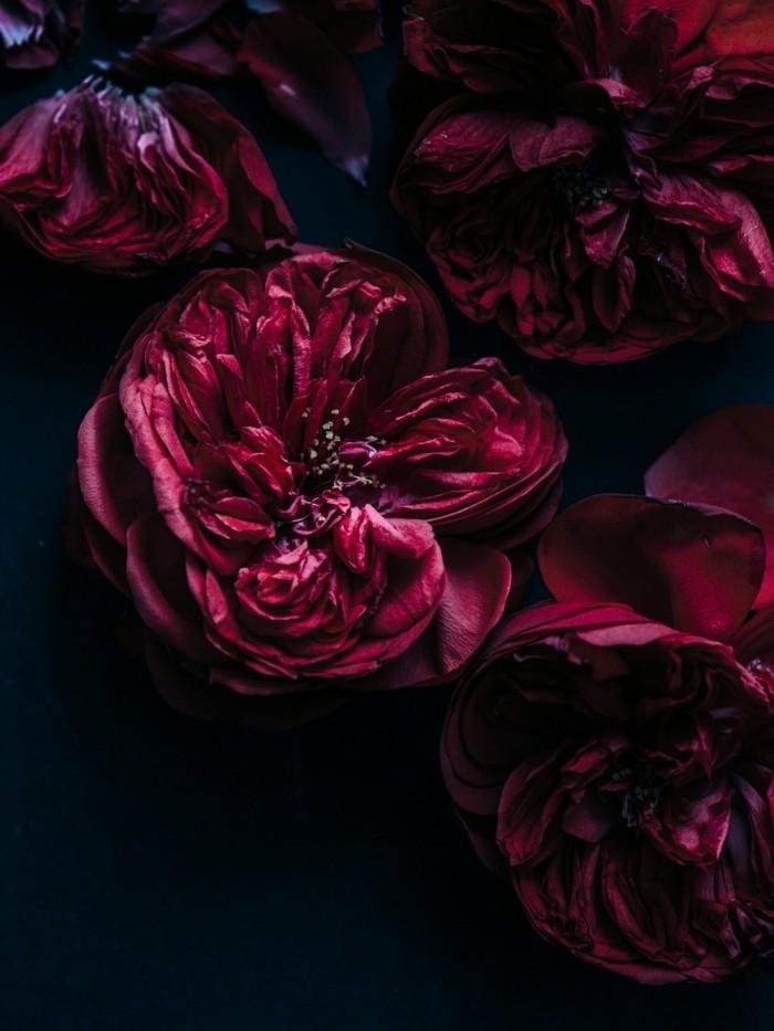 Bordeaux Farbe blume