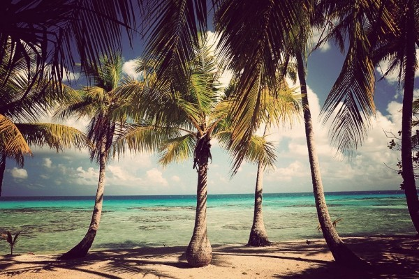 Hohe Kokospalmen